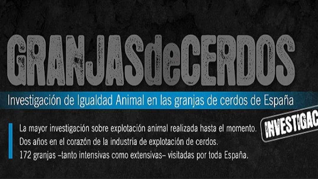 Granjas de Cerdos - Una Investigacion de Igualdad Animal | Documental