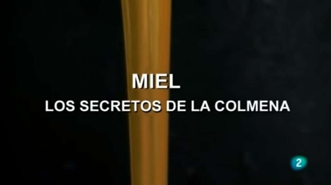 La Miel, los Secretos de la Colmena | Documental